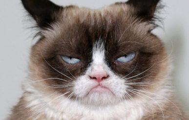 Grumpy-Cat-920x584.jpg